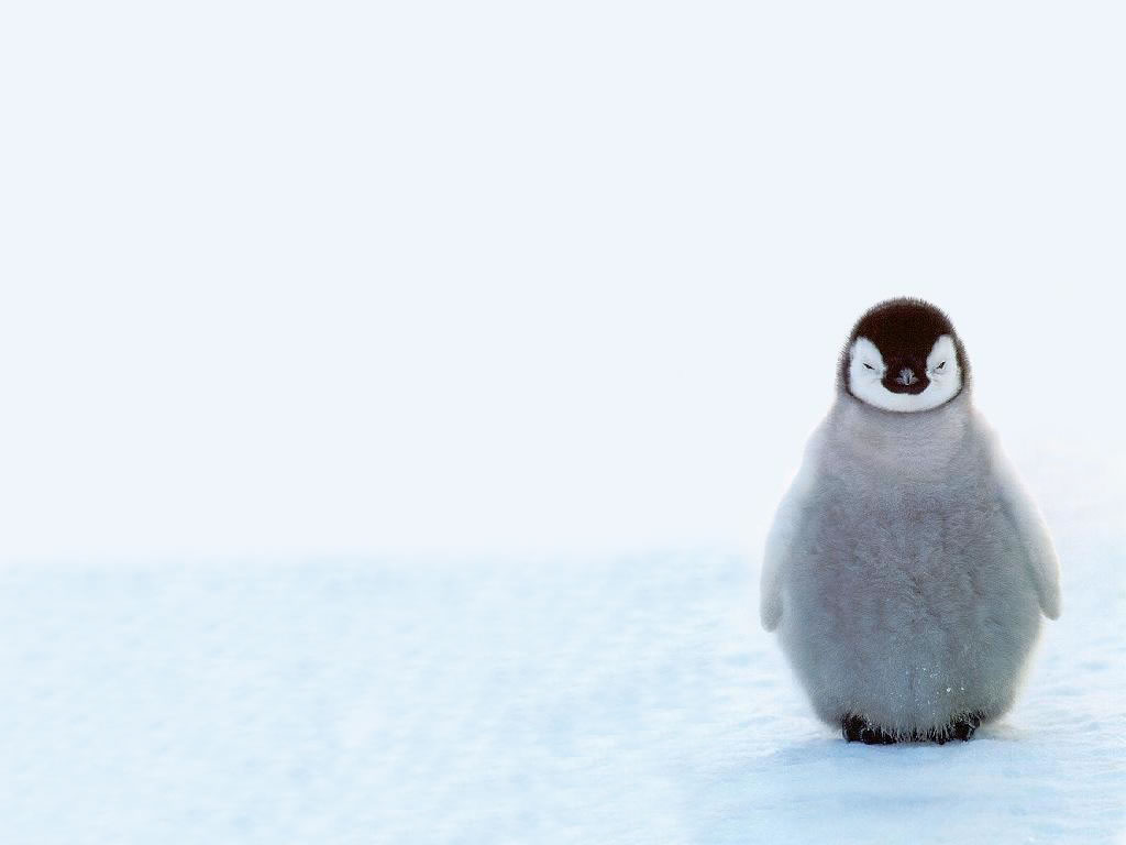6783787-cute-baby-penguins